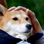 飼い主が新型コロナに感染~ペットを置き去りにしないための対応策~