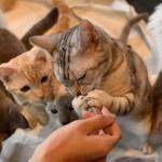 休業中の動物カフェの動物が見られるSNS【関東のお店編】