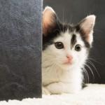 猫と暮らすボランティア in アメリカ:③返還依頼~里親に引き取られるまで