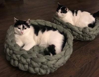 籠に収まる猫