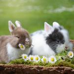 ウサギや小動物の主食の牧草「チモシー」の特徴と、喜んで食べてもらうための工夫