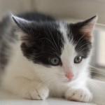 猫と暮らすボランティア in アメリカ:①2匹の保護猫との出会い