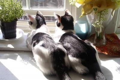 並んだ子猫の背中