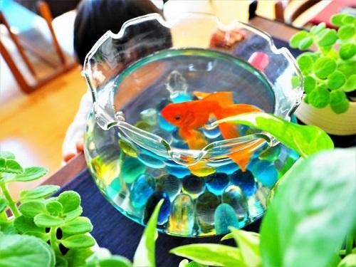 金魚鉢と植物