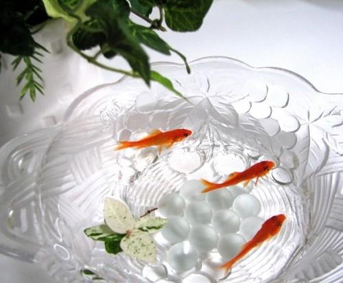金魚鉢と金魚