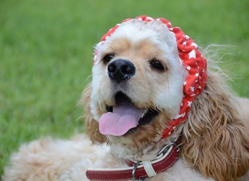 スヌードをつけている犬