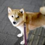 愛犬の「夜のお散歩」に注意すべき3つのポイント&光る夜のお散歩グッズ4選☆