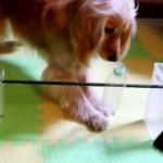 愛犬のおうち遊びをもっと楽しく!ペットボトルのおもちゃと室内アジリティを手作り☆