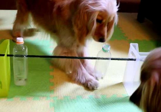 ペットボトルのおもちゃで遊ぶ愛犬