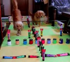 ミニアジリティで遊ぶ愛犬