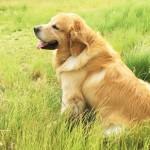 愛犬とのお出かけが楽しくなる!オススメの大型犬用キャリー6選