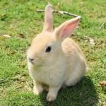 元飼育員が教える!6つの仕草から分かるウサギの気持ち☆