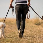 愛犬のお散歩はどのくらいが適正?犬種別に必要な散歩量やお散歩のポイント☆