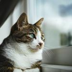 安心して窓を開けたい!猫の網戸からの脱走を防ぐ3つの対策☆