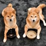 愛犬愛猫に「プチ断食」って効果的?「プチ断食」のメリットとは?