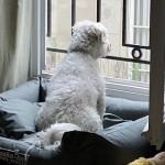 愛犬に上手にお留守番してもらう方法と、ちょうど良いお留守番の時間
