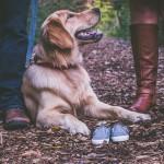 ゴールデン多頭飼いの飼い主が選ぶ!おすすめの犬靴5選☆