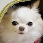おしゃれで機能的!小型犬におすすめのペットキャリー7選☆