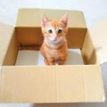 子猫を保護したらどうすれば良い?まずやるべきことと里親探しの方法。