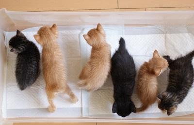 沢山の子猫