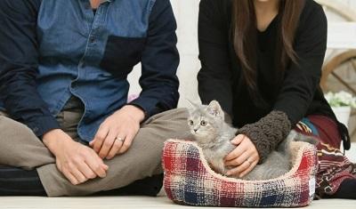 猫を愛でるカップル