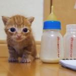 子猫のミルクボランティアさんにインタビュー!リアルな活動内容や体験談