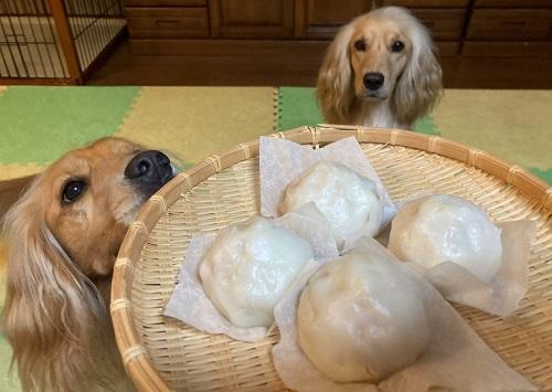 犬と中華まん