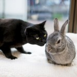 猫と一緒に小動物も飼える?猫と相性の良い小動物、悪い小動物は?