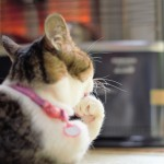 猫が寒がっている時のしぐさやおすすめ寒さ対策、注意点★