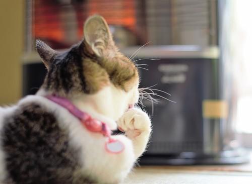猫とストーブ