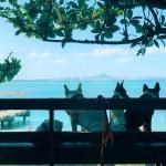 沖縄旅行をペットと快適に過ごすための6つの注意点