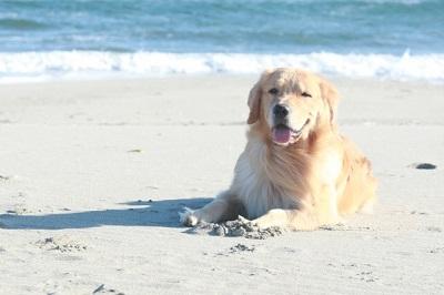 海と砂浜と犬