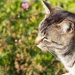 外猫にトイレを!猫も人も地域も幸せになるための「トイレボランティア」