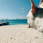 愛犬と沖縄旅行!飛行機の予約方法と搭乗するまでの流れを解説★