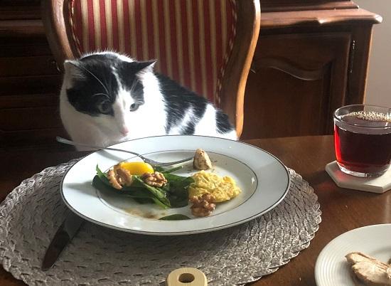 猫とディナー