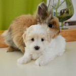 犬と一緒に小動物も飼える?犬と相性の良い小動物、悪い小動物は?