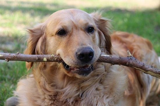 気をくわえる犬