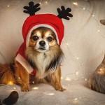 愛犬とのおうちクリスマスを盛り上げる、愛犬用コスチューム3選♪