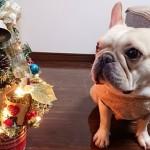 愛犬にもクリスマスはご馳走を♪クリスマスにおすすめの愛犬用メニュー3選☆