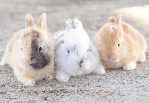 子ウサギ3匹