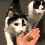 愛猫手作りごはんレシピ☆ツナ&ひよこ豆のクッキー
