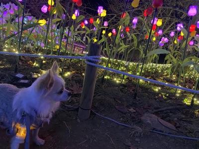 イルミネーションの花畑