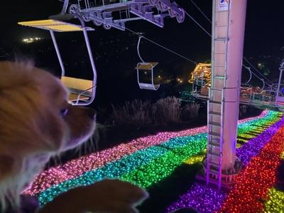 リフトに乗るミックス犬