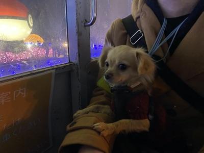 観覧車に乗る犬