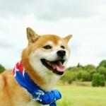 愛犬と沖縄旅行!わんちゃんも入園できるオススメ観光施設4選