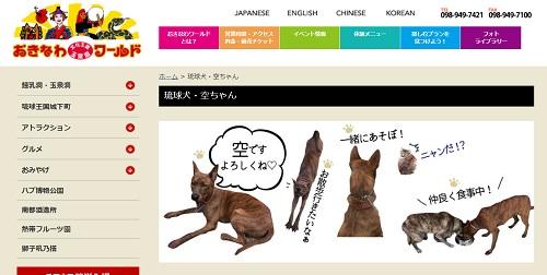 琉球犬「空ちゃん」