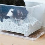 猫砂の種類ってどれが良いの?素材別に特徴をご紹介☆