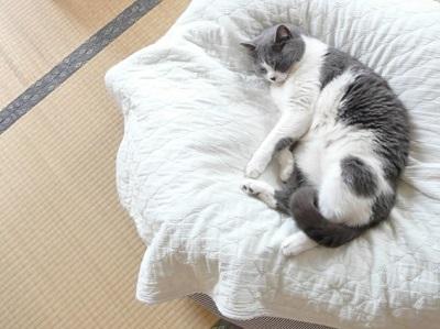 和室で寝る猫