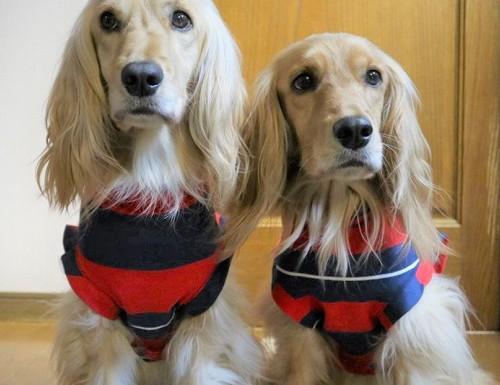 手作り服を着た愛犬