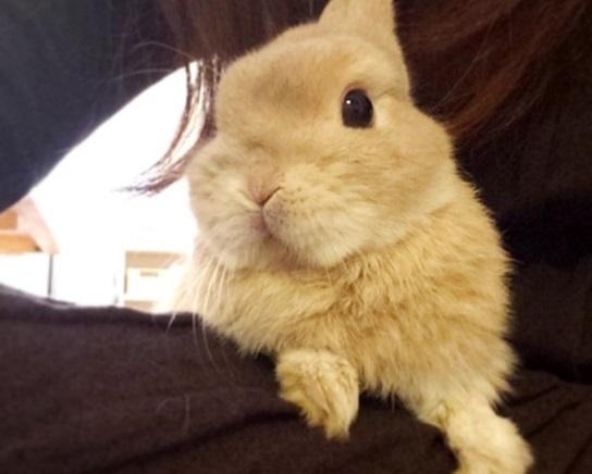 抱っこされるウサギ